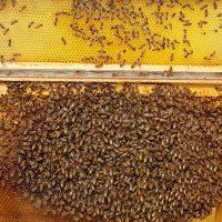 Bienen_Schaukasten-Besserer-Imkerhonig