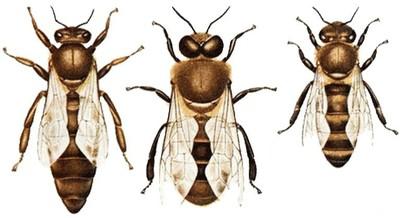 Bienenbilder