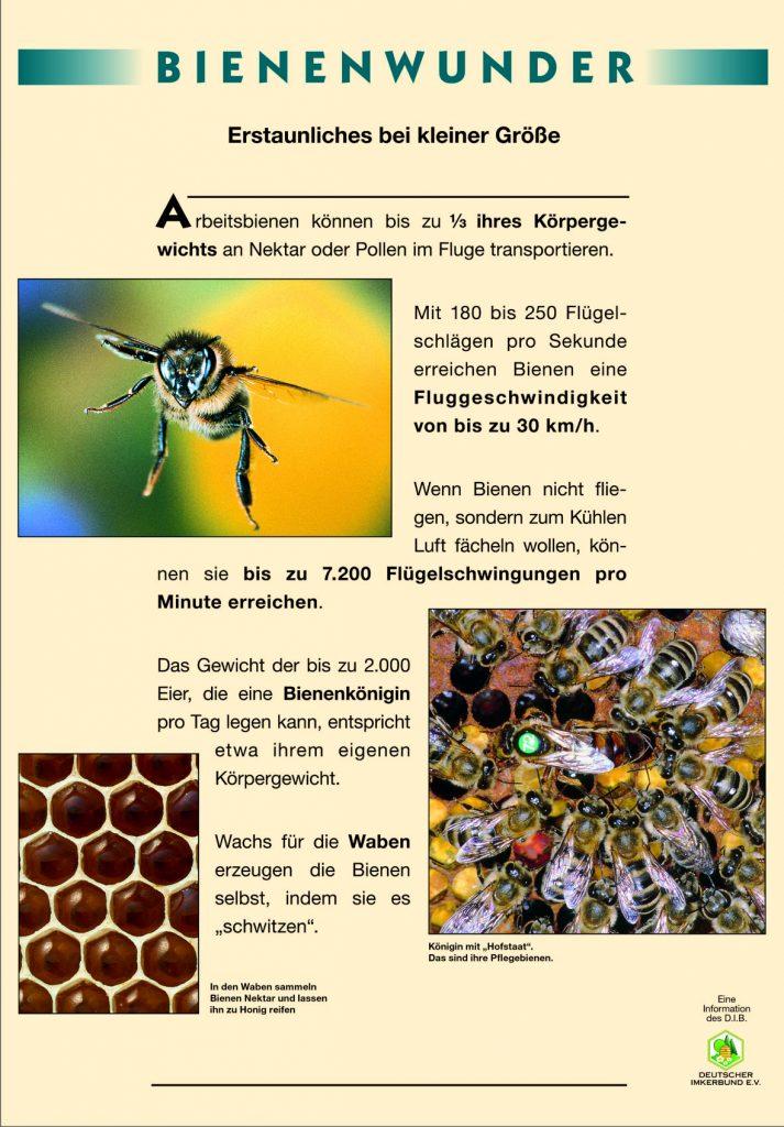 Naturlehrpfad_Bienenwunder