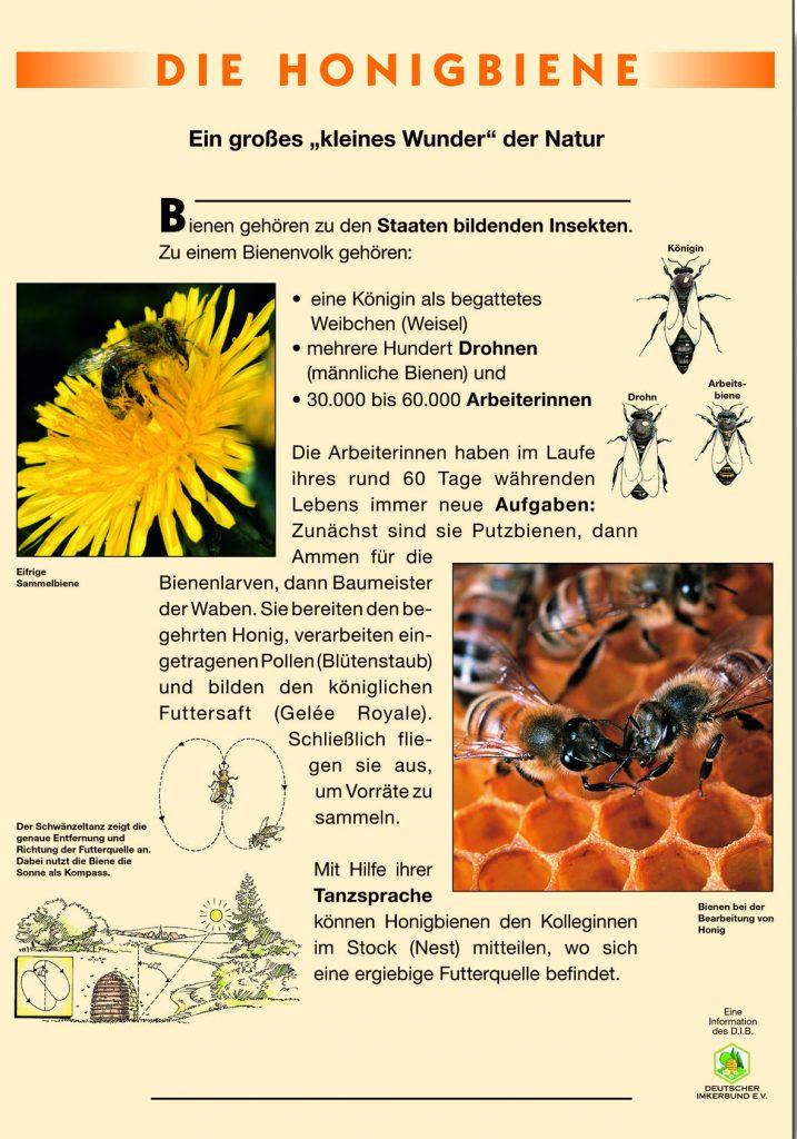 Naturlehrpfad_Die_Honigbiene