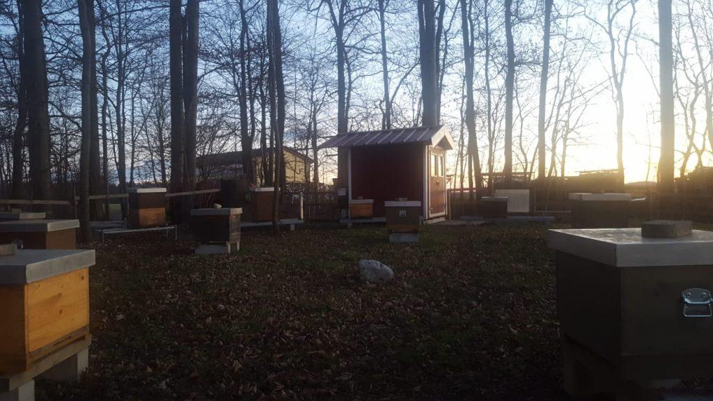 Siebenstern Bienen